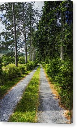 Country Path Walks Canvas Print by Ian Mitchell