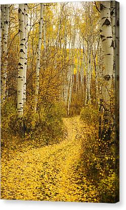 Country Road And Aspens 1 Canvas Print by Ron Dahlquist - Printscapes