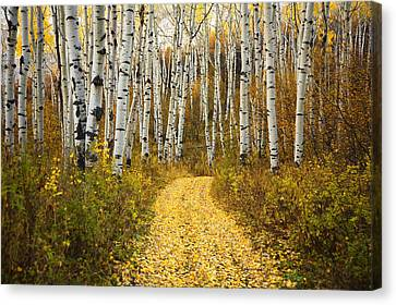 Country Road And Aspens 2 Canvas Print by Ron Dahlquist - Printscapes
