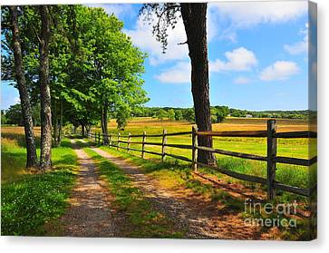 Country Road Canvas Print by Catherine Reusch Daley