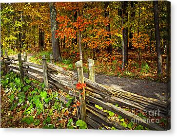 Country Road In Autumn Forest Canvas Print