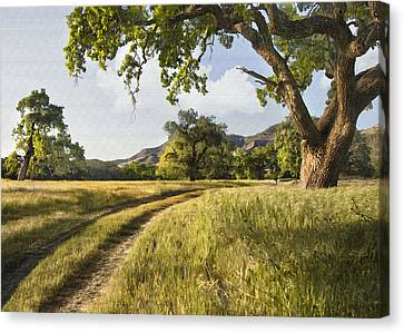 Oak Canvas Print - Country Road by Sharon Foster