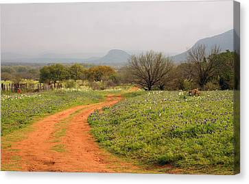 Country Road With Wild Flowers Canvas Print