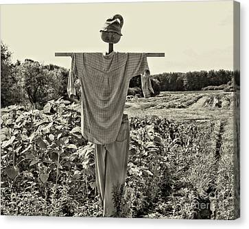 Country Scarecrow In Black And White Canvas Print