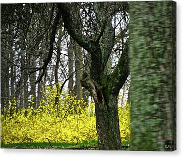 Country Spring Forest Canvas Print by Debra     Vatalaro