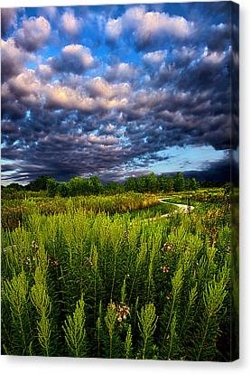 Country Strolling Canvas Print by Phil Koch