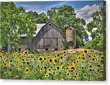 Country Sunflowers Canvas Print by Lori Deiter