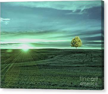 Sun Rays Canvas Print - Country Sunrise by KaFra Art