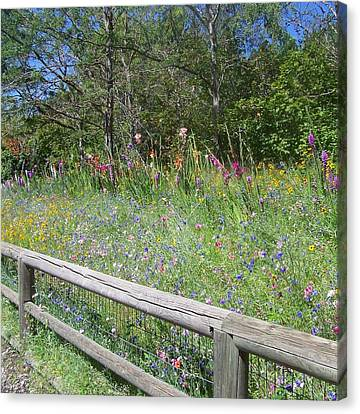 Country Wildflowers Canvas Print by Angi Parks