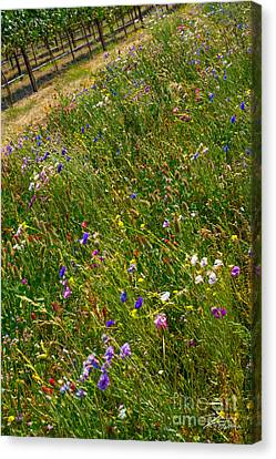 Country Wildflowers I   Canvas Print by Shari Warren