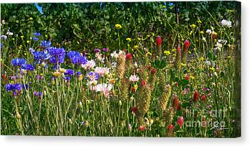 Country Wildflowers Iv Canvas Print by Shari Warren