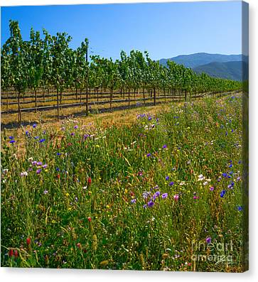 Country Wildflowers V Canvas Print by Shari Warren