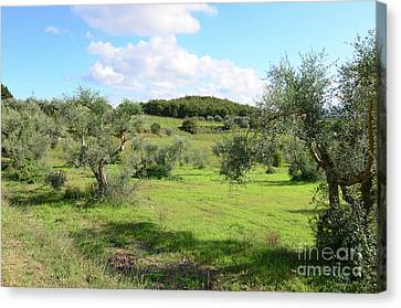 Countryside In Tuscany Italy In The Province Of Siena Canvas Print