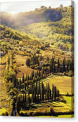 Countryside In Tuscany Italy With Cyprus Trees Canvas Print by Susan Schmitz
