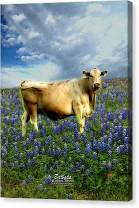 Canvas Print featuring the photograph Cow And Bluebonnets by Barbara Tristan