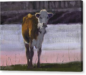Cow At The Pond Canvas Print by John Reynolds