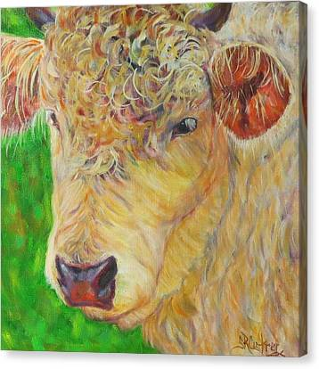 Cute And Curly Cow Canvas Print
