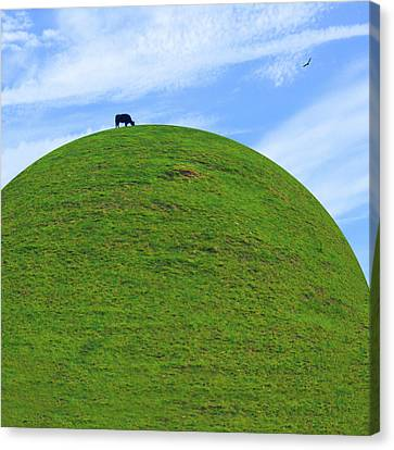 Cow Eating On Round Top Hill Canvas Print by Mike McGlothlen