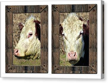 Cow Framed Canvas Print by Tina M Wenger