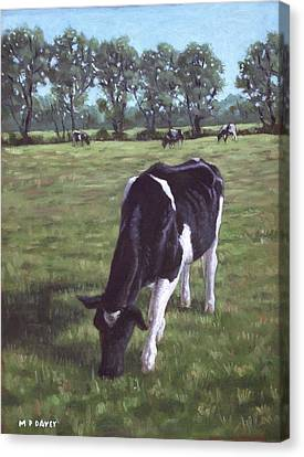 Cow In Field At Throop Uk  Canvas Print by Martin Davey