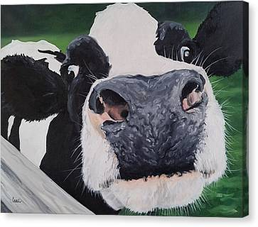 Cow Interrupted  Canvas Print