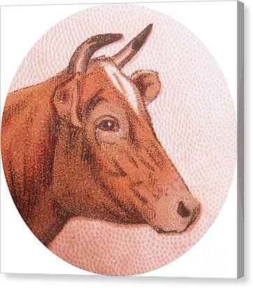 Fed Canvas Print - Cow Iv by Desiree Warren