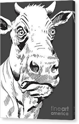 Cow Canvas Print by Krzysztof Chodyra