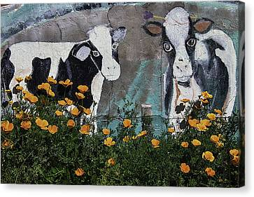 Cow Mural And Poppies Canvas Print