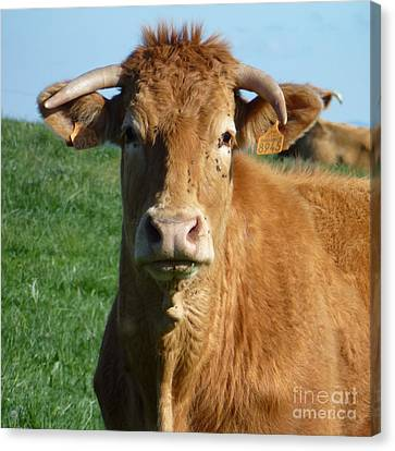 Cow Portrait Canvas Print by Jean Bernard Roussilhe