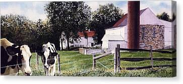 Cow Spotting Canvas Print by Denny Bond