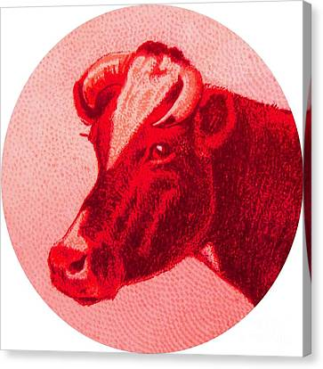 Cow Vi Canvas Print