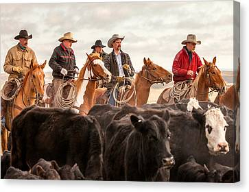 Angus Steer Canvas Print - Cowboy Posse by Todd Klassy