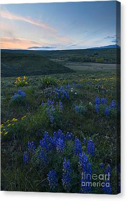 Cowiche Wildflower Sunset Canvas Print by Mike Dawson