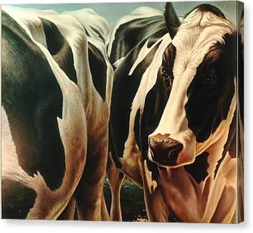 Cows 1 Canvas Print by Hans Droog
