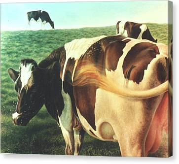 Cows 2 Canvas Print by Hans Droog