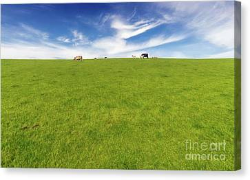 Cows In A Pasture Canvas Print by Adrian Evans