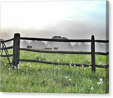Cows In Field Canvas Print by Bill Cannon