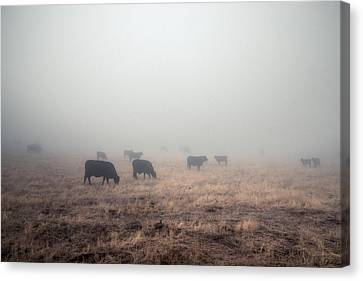 Canvas Print featuring the photograph Cows In Fog - Color by Alexander Kunz