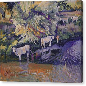 Cows In The Geul Canvas Print