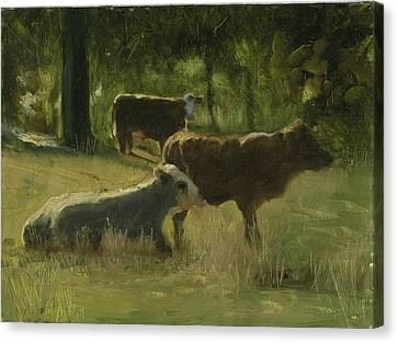 Cows In The Sun Canvas Print by John Reynolds