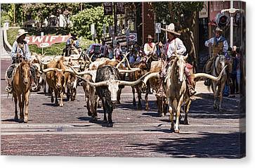 Posse Canvas Print - Cowtown Cattle Drive by Stephen Stookey
