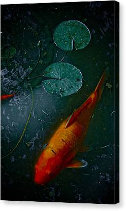 Canvas Print featuring the photograph Coy Number One by Robert Harshman