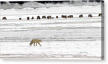 Canvas Print featuring the digital art Coyote And Bison by Kae Cheatham