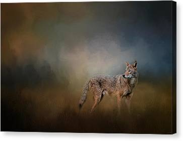 Coyote At Shiloh Canvas Print by Jai Johnson
