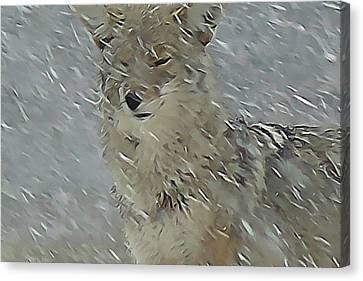 Coyote In Winter Canvas Print by Errol Savage