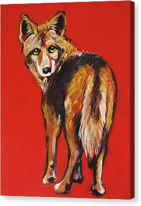 Coyote Looking Back Canvas Print
