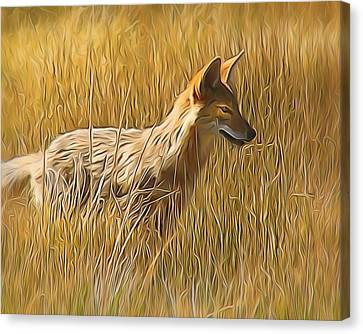 Coyote Sunshine Canvas Print