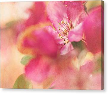 Canvas Print featuring the photograph Crab Apple Blossoms II by Kharisma Sommers