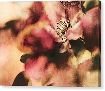 Canvas Print featuring the photograph Crab Apple Blossoms IIi by Kharisma Sommers