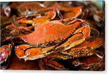 Crab Boil Canvas Print
